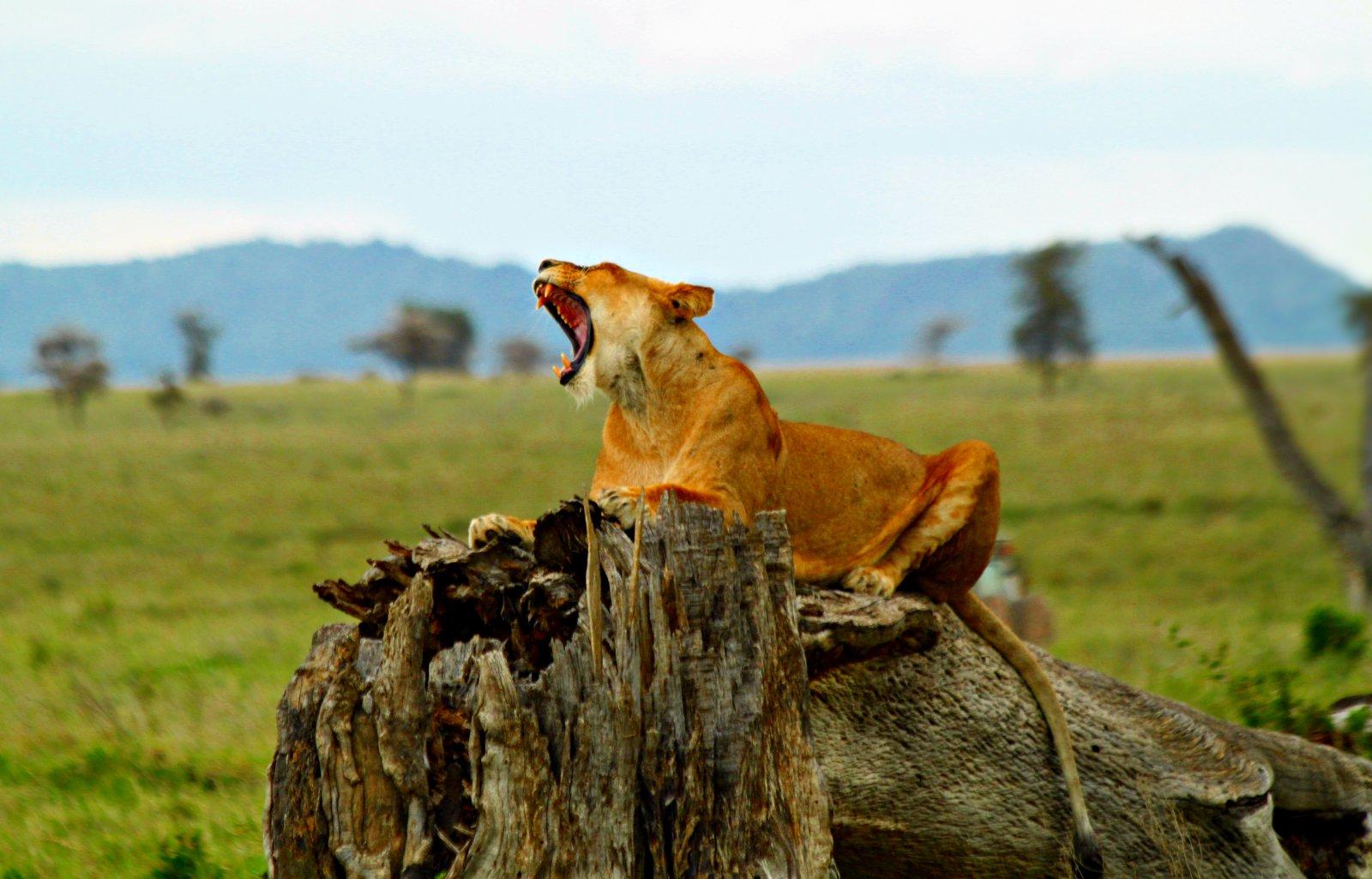 Descubrir cinco infinitas llanuras y sabanas en un safari